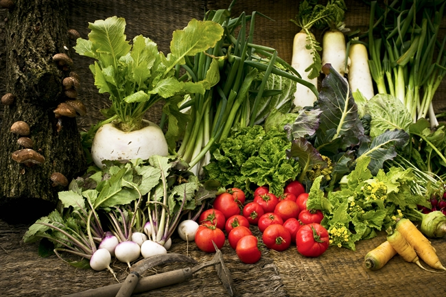 生命の躍動を感じる、とれたての野菜